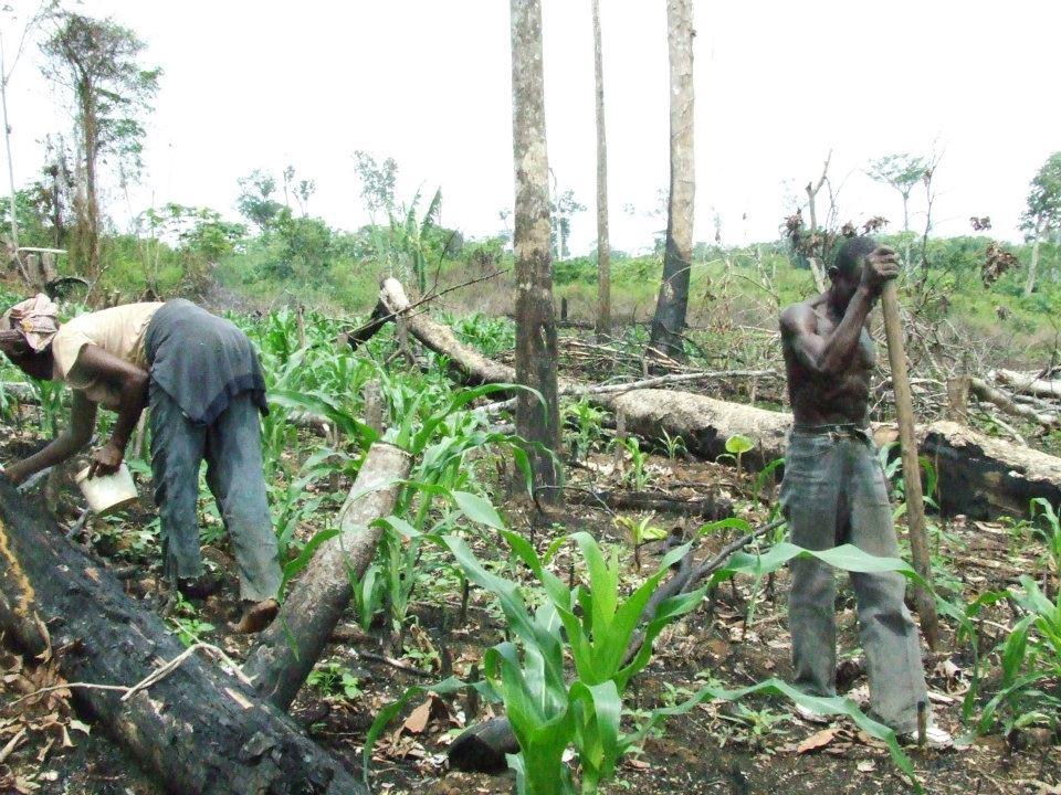 the democratic republic of congo essay Learn about the water crisis facing democratic republic of congo.