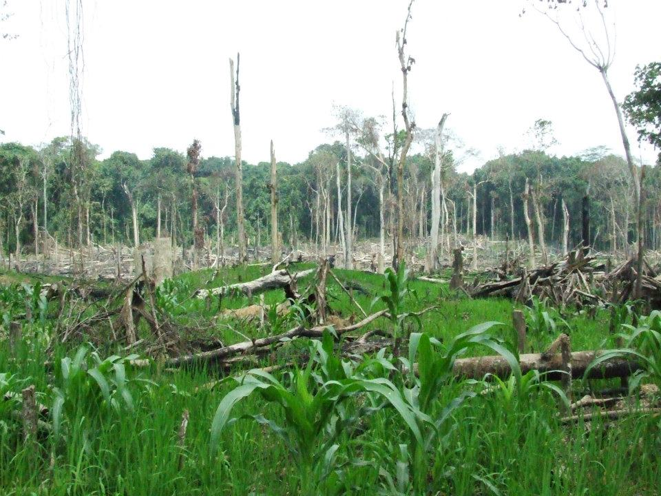 Deforestation and Indigenous People