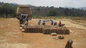 Farmers Association bagging crop production